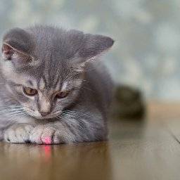 pet-laser-pointers-have-enough-power-to-blast-away-cells-in-the-back-of-the-eye