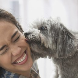why-do-dogs-lick-your-face