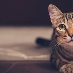 keeping-cats-safe-cats-and-foreign-bodies-katzenworld