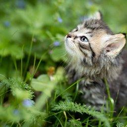 6-ways-to-be-an-eco-friendly-cat-owner-katzenworld