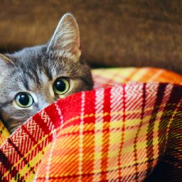 why-do-cats-hide-and-when-should-you-be-worried