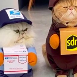 adorable-cats-halloween-costumes-make-them-the-purrfect-package-deliverers