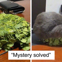 50-hilarious-cat-posts-that-you-need-to-see-right-meow-new-pics