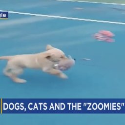 cbs3-pet-project-what-it-means-when-your-dog-cat-gets-the-zoomies