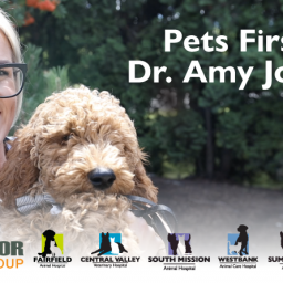 pets-first-video-series-obesity