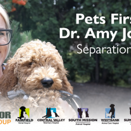 pets-first-video-series-separation-anxiety