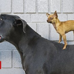 dogs-are-humans-oldest-companions-dna-shows