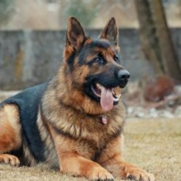 this-is-the-dog-breed-you-should-adopt-according-to-your-zodiac-sign