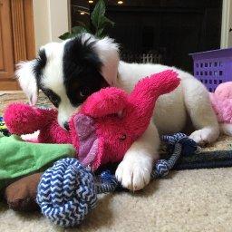 13-mostly-indestructible-dog-toys