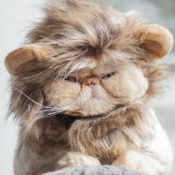 10-flat-faced-cat-breeds-that-youll-want-to-snuggle-10-flat-faced-cat-breeds-youll-want-to-snuggle-i-the-discerning-cat