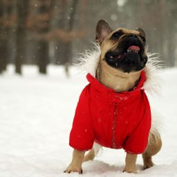 13-best-dog-jackets-and-boots-for-your-pet-this-winter