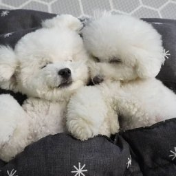 doggie-daycare-shares-adorable-photos-of-their-puppies-during-naptime
