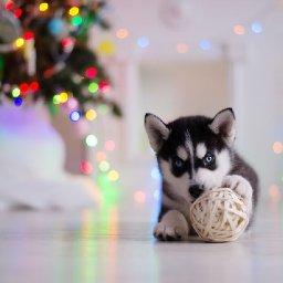8-not-so-merry-holiday-pet-hazards-activebeat