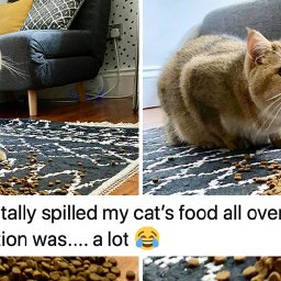 the-50-most-important-cat-tweets-of-the-year-the-50-most-important-cat-tweets-of-the-year