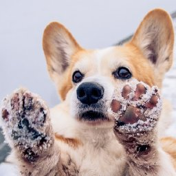 cold-weather-is-kicking-in-caring-for-paws-and-pads-in-winter-the-dogington-post