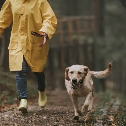 13-things-to-remember-when-walking-your-dog-in-rain-and-floods