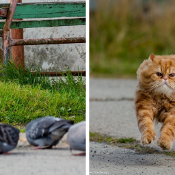 this-photographer-manages-to-capture-the-step-by-step-process-of-a-cat-chasing-pigeons-15-pics
