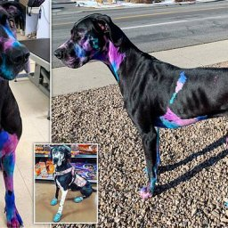 dog-groomer-dyes-her-pooch-luminous-metallic-colours