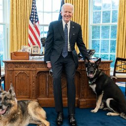 joe-biden-poses-with-first-dogs-champ-and-major-in-the-oval-office