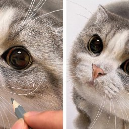 artist-draws-incredibly-realistic-cat-faces-youll-want-to-reach-out-and-touch