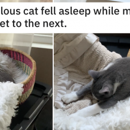 this-cat-fell-asleep-moving-from-one-basket-to-the-next-and-its-todays-most-relatable-thing-this-cat-fell-asleep-moving-fr