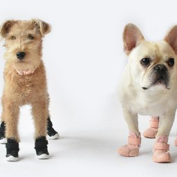 fashion-for-pooches-rifruf-launches-vet-endorsed-ultra-cute-dog-sneakers-luxurylaunches