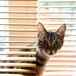 infographic-what-are-the-best-blinds-for-cat-owners-katzenworld