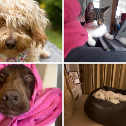 11-of-our-favourite-lockdown-pets-from-the-past-few-months