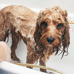 how-often-should-you-bathe-your-dog
