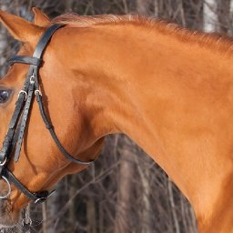 horses-can-recognise-themselves-in-a-mirror-new-study