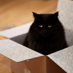 study-suggests-cats-like-illusory-boxes-as-much-as-real-ones-nerdist-study-suggests-cats-like-illusory-boxes-as-much-as-real-o