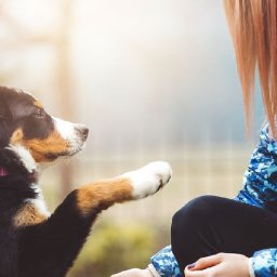 professional-training-tips-every-puppy-parent-should-follow