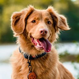 a-complete-list-of-the-most-and-least-dog-friendly-national-parks