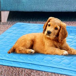 this-cooling-mat-for-cats-and-dogs-has-won-over-hundreds-of-amazon-shoppers-and-their-pets